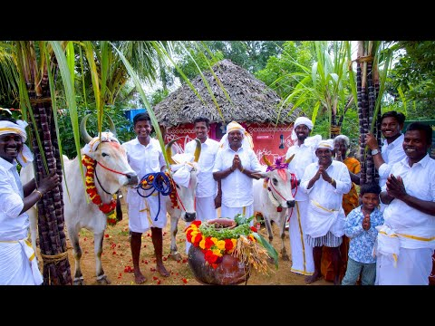 PONGAL CELEBRATION | Mattu Pongal | Grand Tamil Special Festival Celebrate in Village by farmers