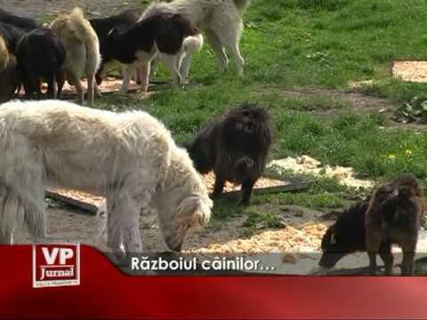 Războiul câinilor…