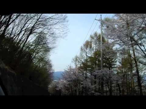 小諸市と近隣の桜並木を走ってみた。
