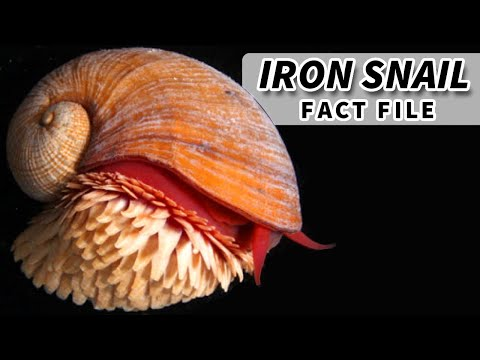 The Strangest Creatures on Earth: Magnetic Deep Sea Snails
