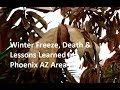 Download Lagu Tropical Plants (9B) - Winter Freeze, Death & Lessons Learned Mp3 Free