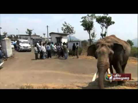 Forest-officials-intensify-efforts-to-trap-two-wild-elephants-in-Bandalur-Nilgiri