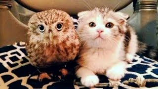 Kitten And Baby Owl Meet For The First Time And Their Next Move Is Too Much For Words by Did You Know Animals?