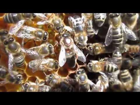 You Camp #13 #foglietv #youcamp – Il canto dell'ape regina