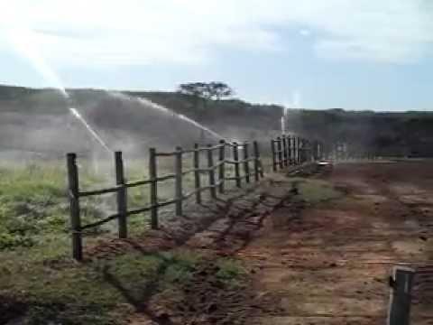 Ararinha (Deone) montagem de irrigacao