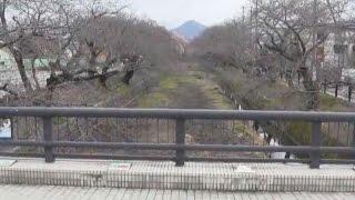羽黒桜まつり7会場めぐり
