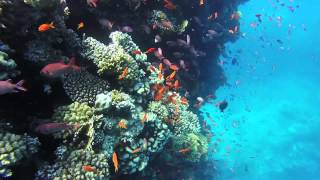 Safaga Egypt  City pictures : Safaga Egypt 2015 Lotus-Bay-Hotel diving red sea