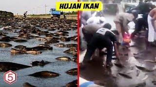 Video Fenomena Hujan Paling Aneh Pernah Terjadi, Berbagai Hewan Jatuh Dari Langit MP3, 3GP, MP4, WEBM, AVI, FLV April 2019
