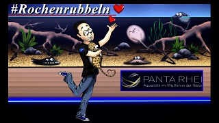 Hi Leute,hier mal ein kurzes Video über meinen Trip zur Panta Rhei :DHier geht's zur Seite von Panta Rhei :http://shop.panta-rhei-aquatics.comHier geht's zum Wikipediaeintrag :https://de.wikipedia.org/wiki/Panta_rheiHier geht's zu Trees :https://www.facebook.com/listentotrees/?fref=tsHier geht's zum Look around von Sindelfingen :https://www.youtube.com/watch?v=GZLG923eX1cHier geht's zu meinem FB-Profil :https://www.facebook.com/stormy.buchheitHier geht's zu meiner FB-Seite :https://www.facebook.com/Tobis-Aquaristikexzesse-1453094571634216/Hier geht's zu meinem Twitterprofil :https://twitter.com/BuchheitTobiasHier geht's zu meinem Instagramprofil:https://www.instagram.com/tobisaquaristikexzesse/Hoffe das Video gefällt euchViele liebe GrüßeTobi