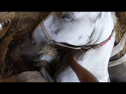這匹馬整整受困12小時13名消防員都無法拯救他,他將死但主人對他說「一句話」最感人的奇蹟就出現了!