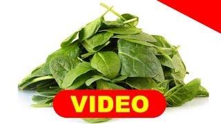 CURA RAPIDA CON PLANTA MEDICINAL PARA LA DIABETES ▻▻ http://curardiabetes.bonus-777.com/testimonios/ Más de...