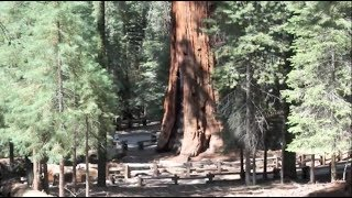The World's Largest Tree, Sequoia National Park, California