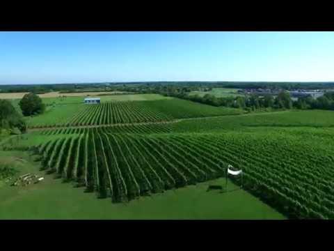 Ravine Estate Vineyard Winery in 4k