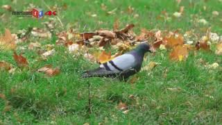 Осень в Мариуполе