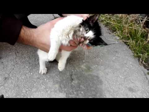 This Man Save Kitten was Trapped In A Jar