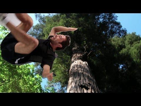 Wie können Bäume größer sein als 10m?