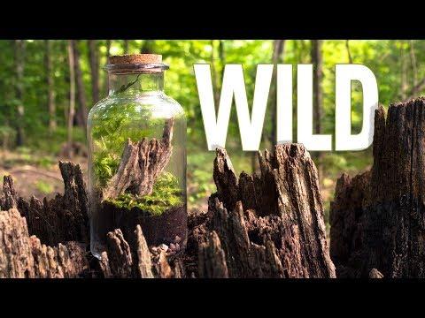 Lets Make a Terrarium in the Wilderness_Terrárium, Vivárium. Heti legjobbak