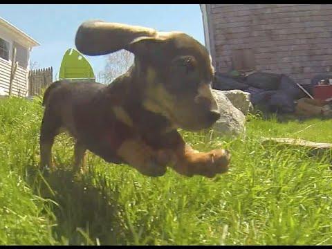 i cuccioli e le avventure al parco