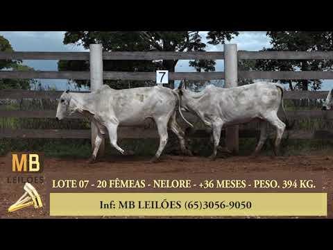 184º LEILÃO VIRTUAL MB LEILÕES