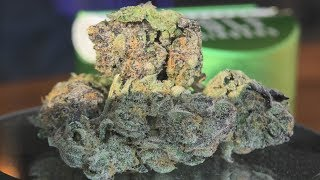 SinMint Sorbet Marijuana Monday by Urban Grower