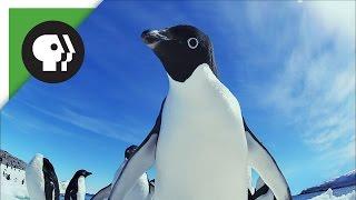 Penguin Invasion!