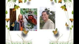 Incrível associação entre borboletas e formigas