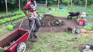 We planted some Swiss Chard by seed in one of our raised beds and now they're ready for transplanting. Watch as we...