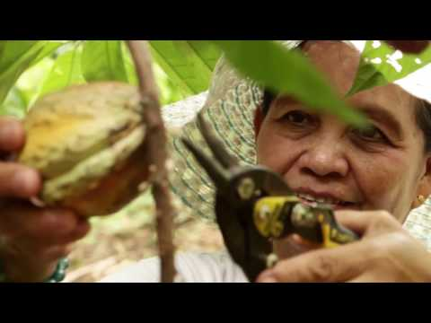Cacao Production & Processing/Cocoa Products for Livelihood