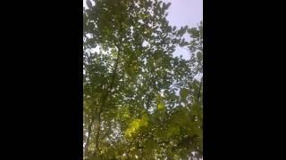 Video Odpolední jam