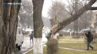 Наслідки вітру Сокаль