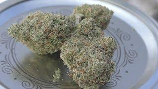 Donkey Butter Marijuana Monday (Monster Truck Edition) by Urban Grower