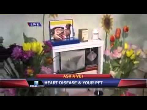 Pet Heart Disease Prevention-Ask a Vet with Dr. Jyl Rubin