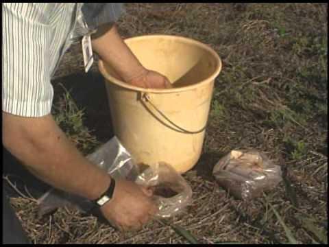 Plantio direto reduz efeitos da degradação do solo