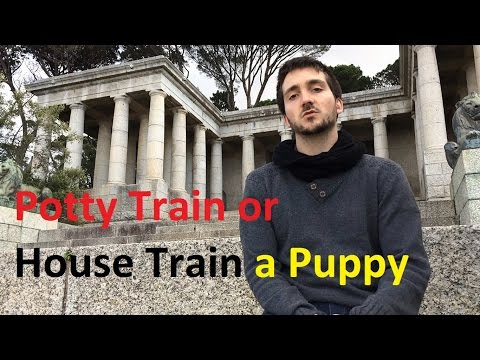 How to House Train or Potty Train a Puppy – Dog Training Nibbles Ep4