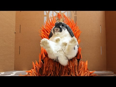 Rabbit Eats a Castle Game of Thrones