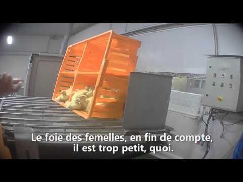 Lì dove nasce il Foie gras