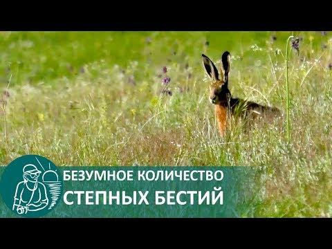 Никогда не видела столько зайцев. Особенно зайцев бегущих прямо на меня