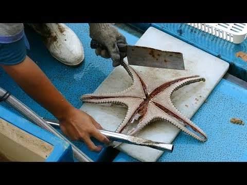 How To Cut Up A Live Starfish For Traditional Chinese Soup