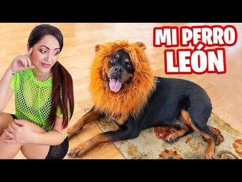 MI PERRO LEÓN! 😱 ABRIENDO REGALOS RAROS 😅 COMPRAS ONLINE Haul Mascotas 🎁 Sandra Cires Art y Karim