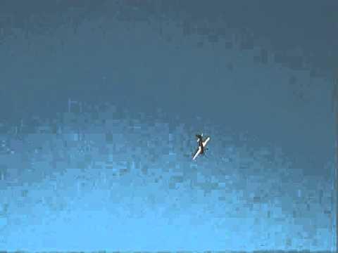 Демонстрационный полет Pilotage Edge-540