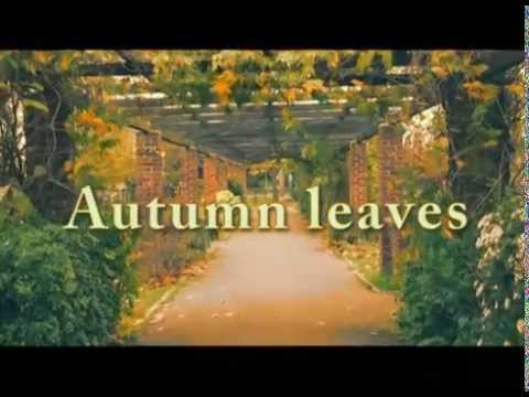 Chris Brown - Autumn Leaves (ft. Kendrick Lamar) A Level Music Video