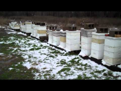 Bees in Winter. North. Mississippi