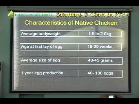 DA-BAR Free Seminar Series: Native Chicken Production Part 1