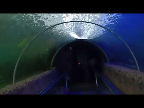 Water World, Kelaniya