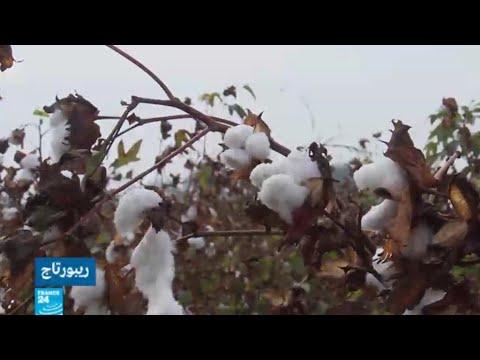 العرب اليوم - شاهد: خطة للنهوض في قطاع