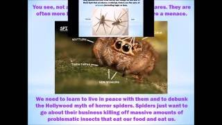 Download Lagu Helpful Spider Identification For BC Canada Mp3