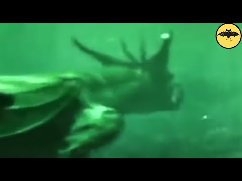6 Mysterious Underwater Creatures Caught On Tape.