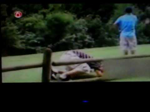 funny golf bloopers