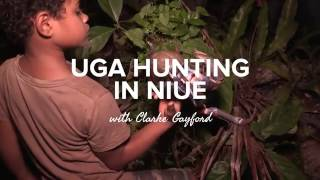 Find out what happens after dark in the Niue forest, on a hunt for an Uga (coconut crab).