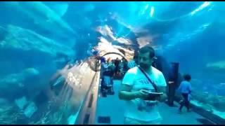 Dubai'deki Akvaryum Herkesi Büyülüyor